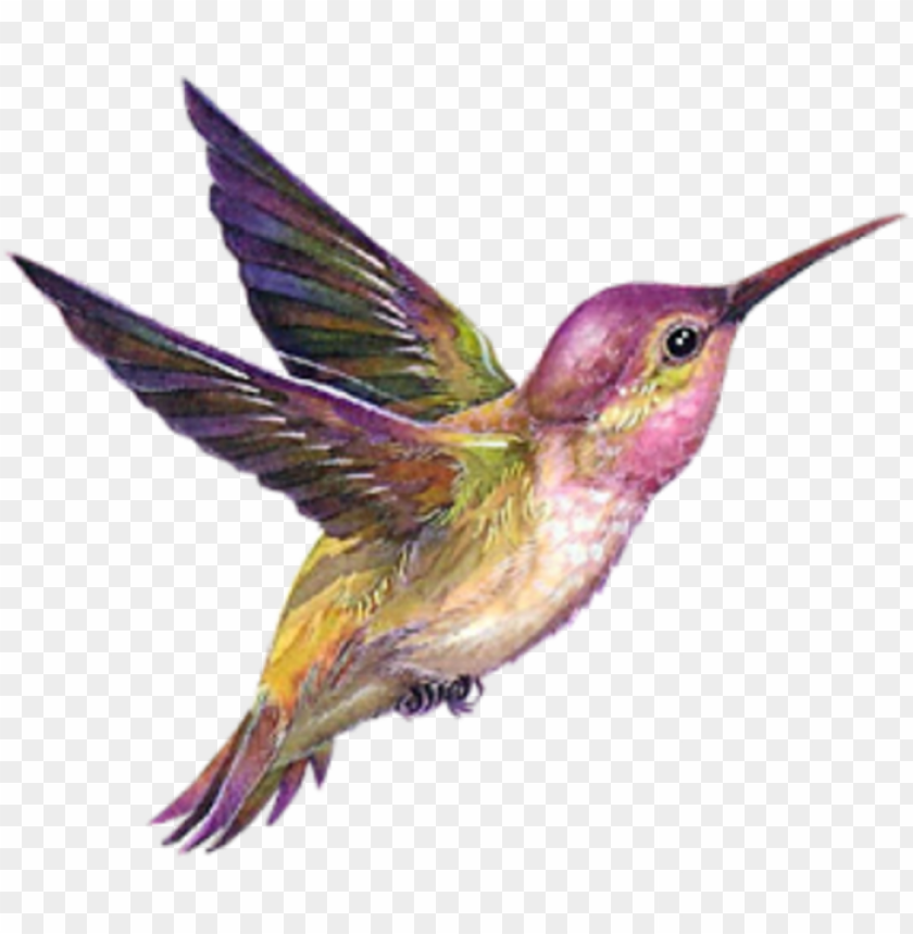 Dessin Colibri En Couleur Png Image With Transparent Background