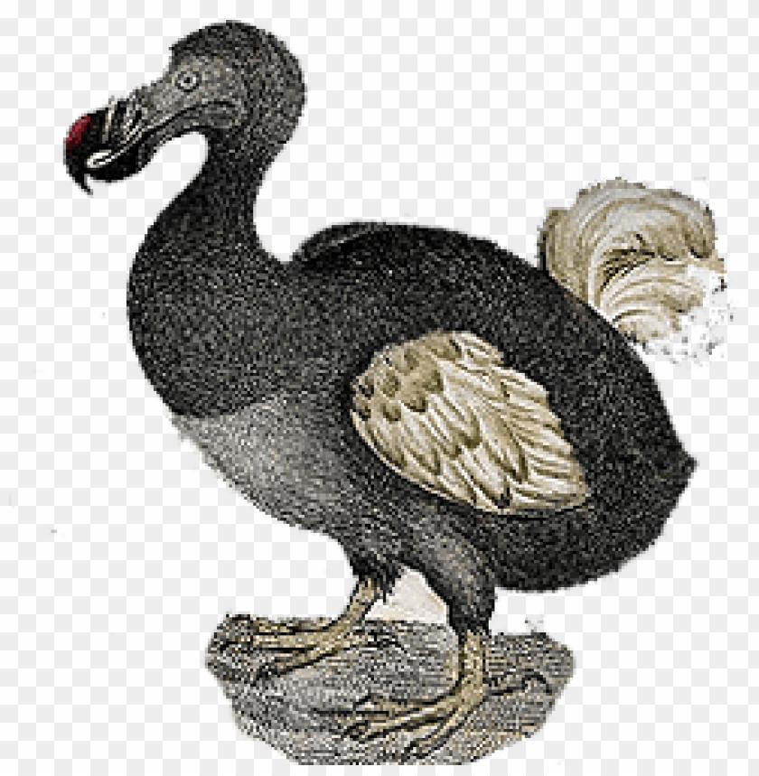 free PNG Download dodo vintage png images background PNG images transparent