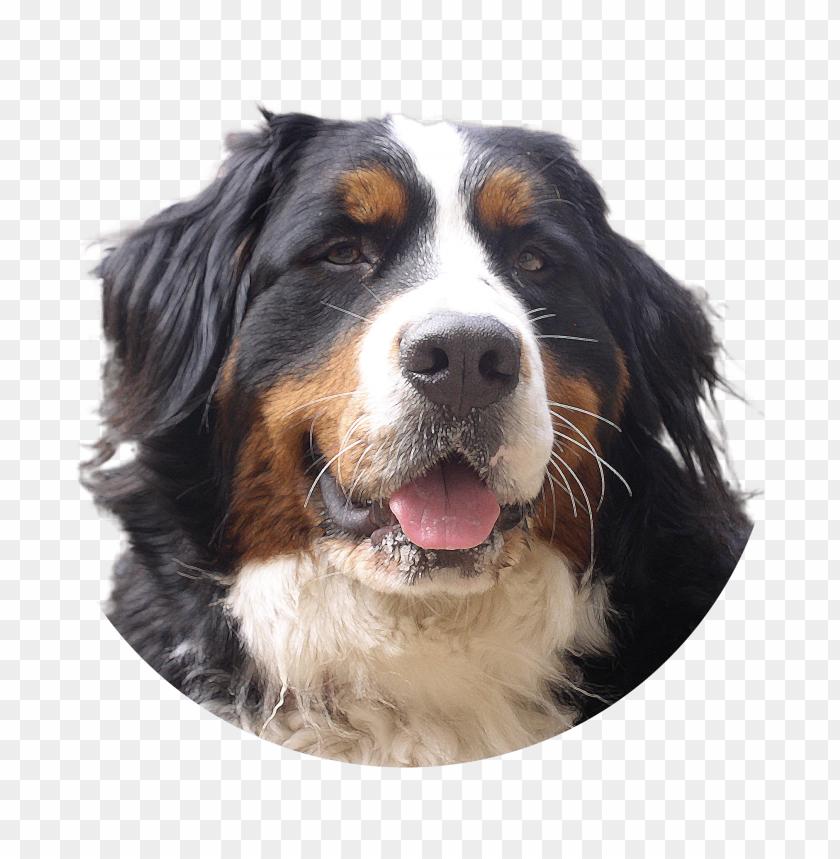 free PNG Download dog png images background PNG images transparent
