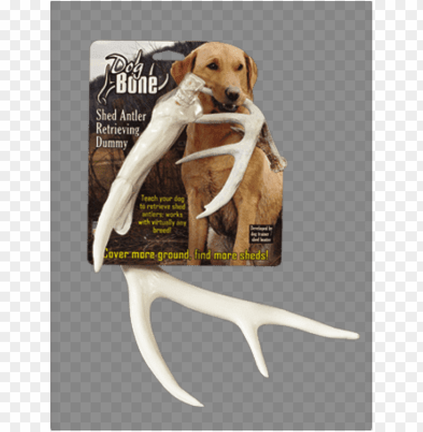 free PNG dog bone shed dummy retrieving antler by dog & PNG image with transparent background PNG images transparent