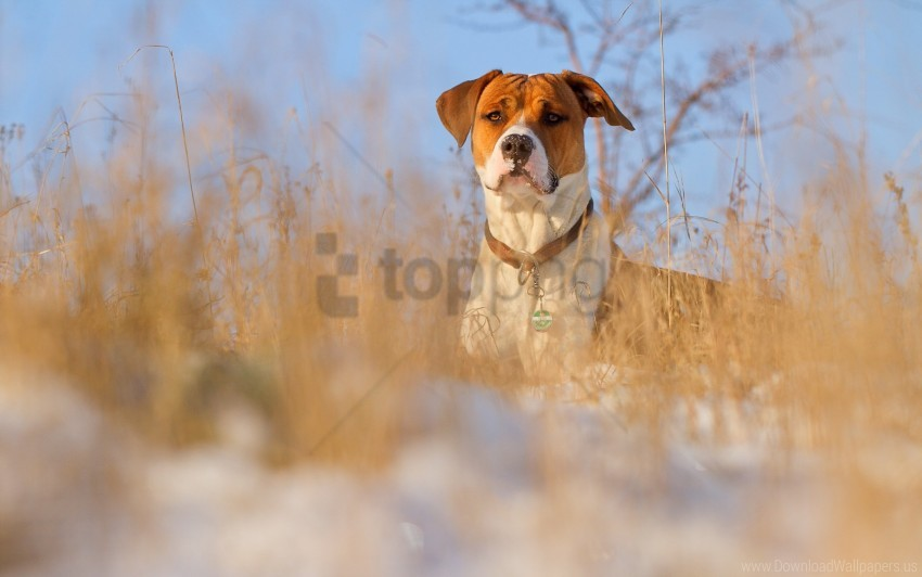 dog, dog collar, grass, muzzle wallpaper background best stock photos@toppng.com