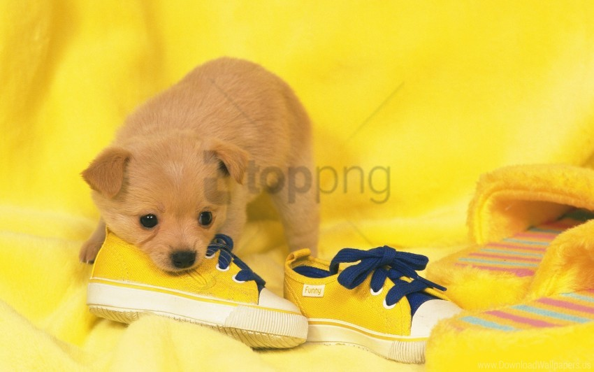 free PNG dog, dog, puppy, puppy, shoes, shoes wallpaper background best stock photos PNG images transparent