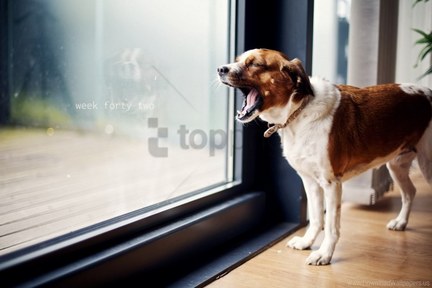 free PNG dog, door, standing, yawning wallpaper background best stock photos PNG images transparent