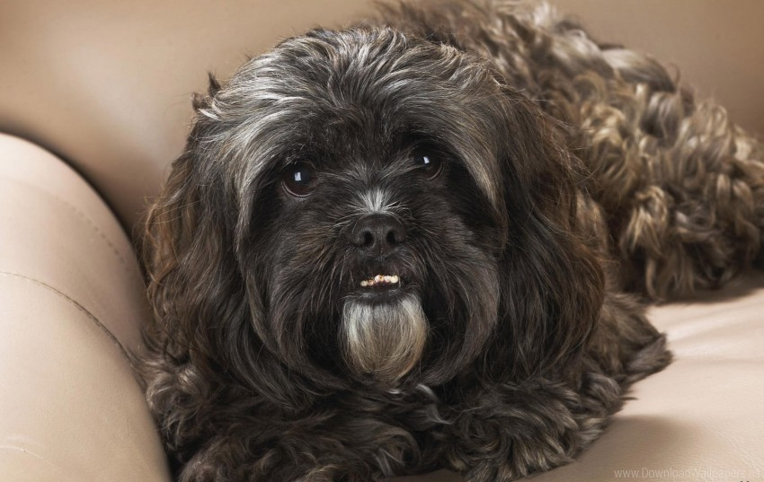 free PNG dog, down, face, hair, look wallpaper background best stock photos PNG images transparent