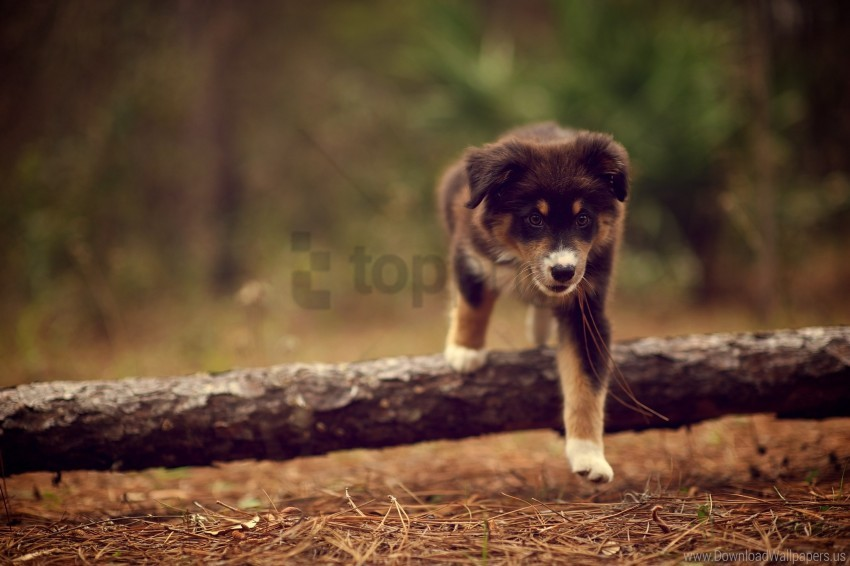 free PNG dog, dry, nature, needles, puppy, stick, walking wallpaper background best stock photos PNG images transparent