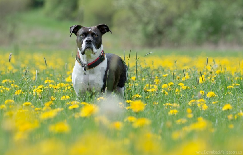 free PNG dog, eyes, flowers, grass, muzzle wallpaper background best stock photos PNG images transparent