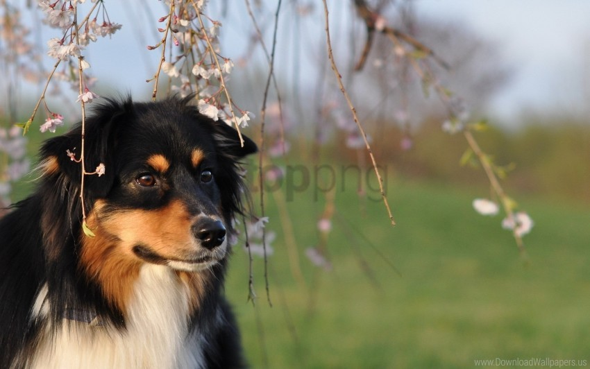 free PNG dog, eyes, grass, tree wallpaper background best stock photos PNG images transparent