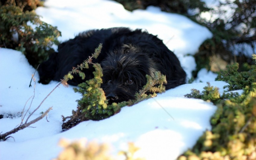 free PNG dog, eyes, nature, snow wallpaper background best stock photos PNG images transparent