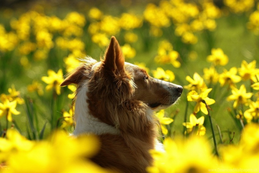 free PNG dog, face, flowers, pro wallpaper background best stock photos PNG images transparent