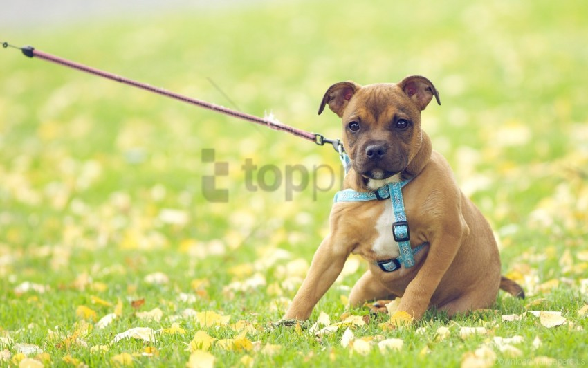 free PNG dog, field, flowers, grass wallpaper background best stock photos PNG images transparent