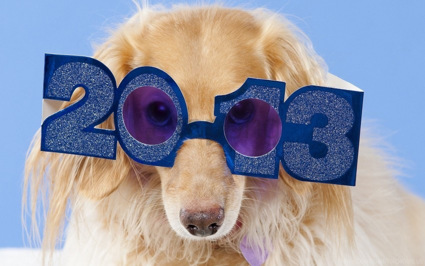 free PNG dog, fluffy, glasses, happy wallpaper background best stock photos PNG images transparent