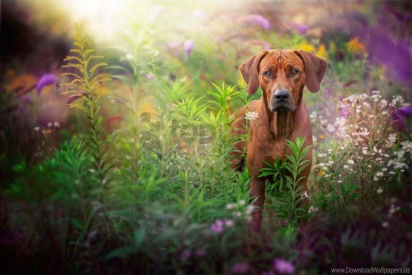 free PNG dog, glare, grass, muzzle wallpaper background best stock photos PNG images transparent