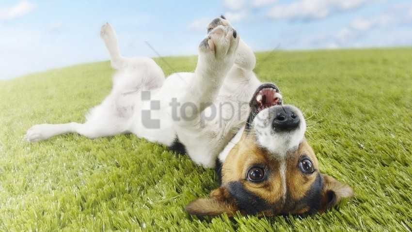 free PNG dog, grass, lie, playful wallpaper background best stock photos PNG images transparent