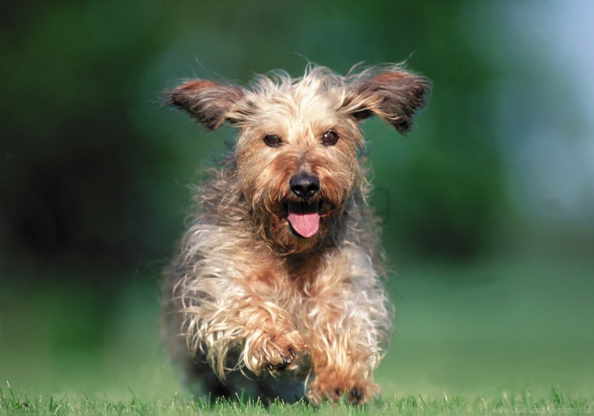 free PNG dog, grass, running wallpaper background best stock photos PNG images transparent