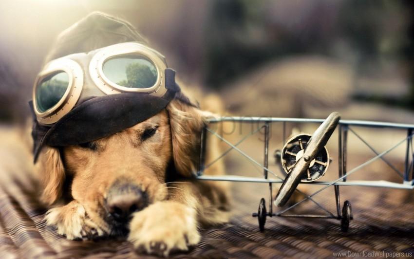 free PNG dog, hat, pilot, plane, sunglasses wallpaper background best stock photos PNG images transparent