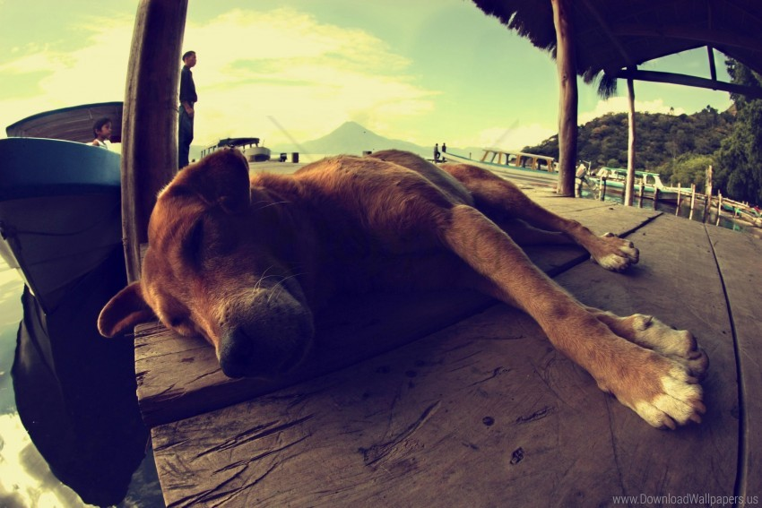 free PNG dog, lying, rest, sleeping wallpaper background best stock photos PNG images transparent