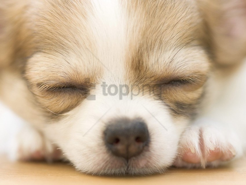 free PNG dog, muzzle, puppy, spotted wallpaper background best stock photos PNG images transparent