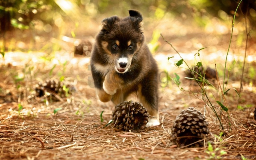 free PNG dog, nature, pine cones, puppy wallpaper background best stock photos PNG images transparent