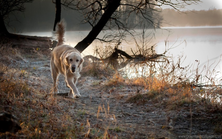 free PNG dog, nature, run, walk wallpaper background best stock photos PNG images transparent