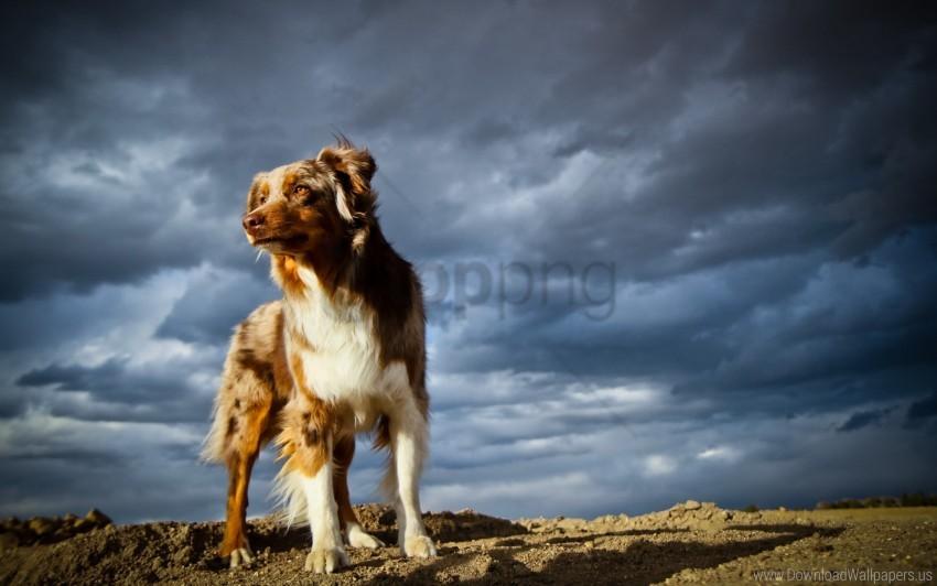 free PNG dog, rocks, sky wallpaper background best stock photos PNG images transparent