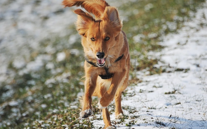 free PNG dog, running, trail, wind wallpaper background best stock photos PNG images transparent