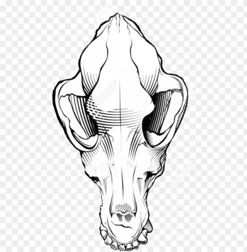 free PNG dog skull black and white free dog - dog skull drawi PNG image with transparent background PNG images transparent