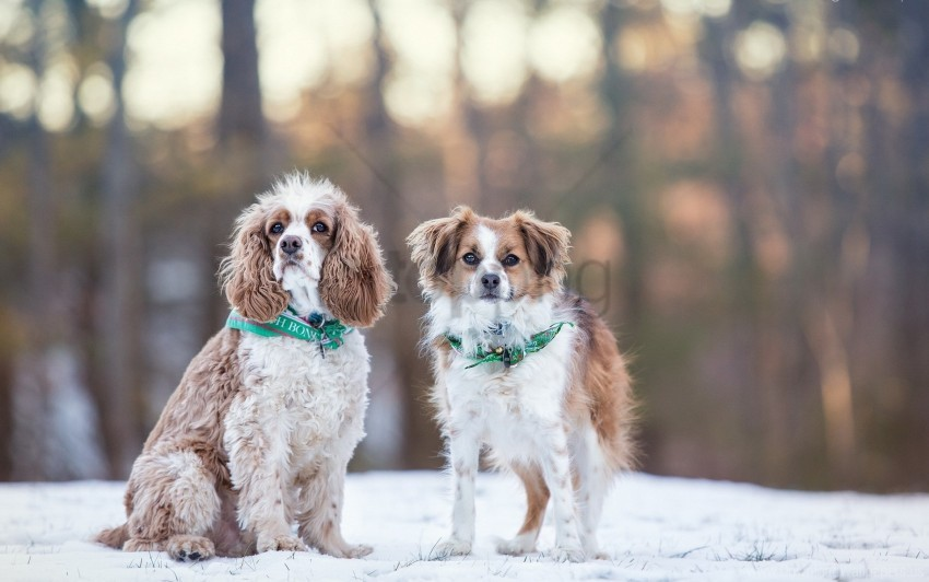 Dog Snow Winter Wallpaper Background Best Stock Photos Toppng
