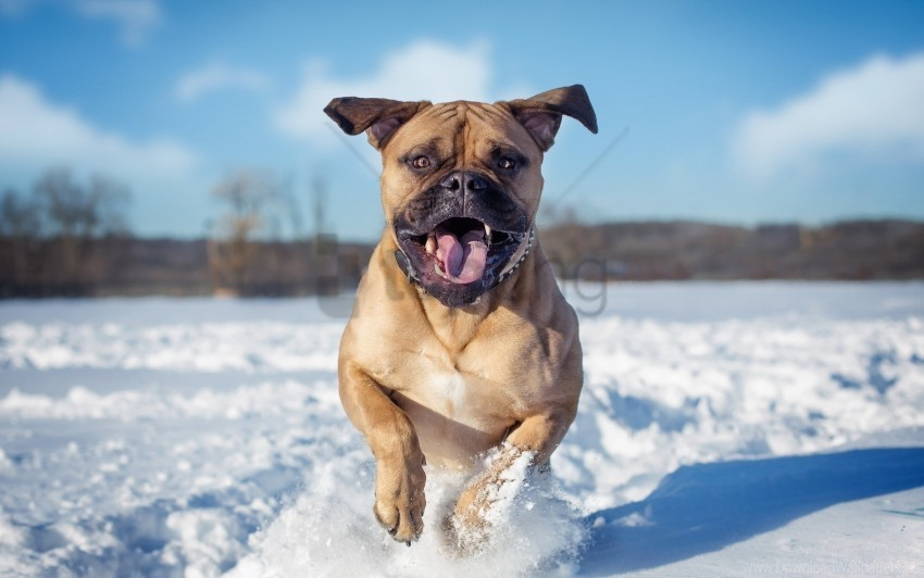 free PNG dogs, jump, snow wallpaper background best stock photos PNG images transparent
