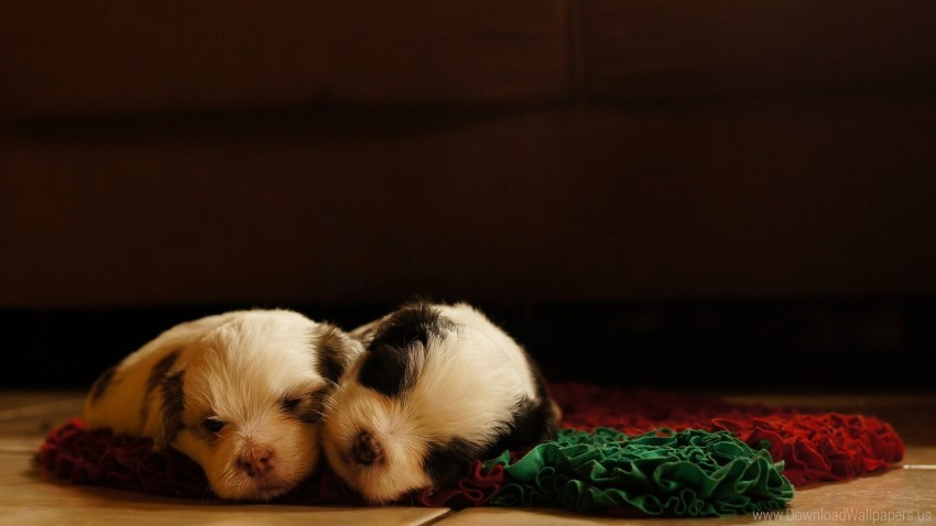 free PNG dogs, lying, puppies, sleeping, sleeping pad wallpaper background best stock photos PNG images transparent