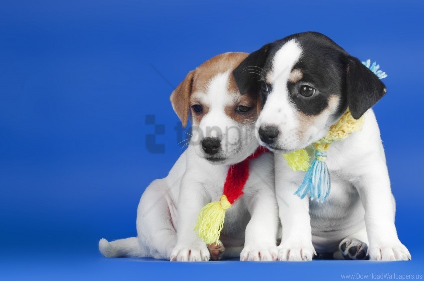 free PNG dogs, puppies, scarves wallpaper background best stock photos PNG images transparent