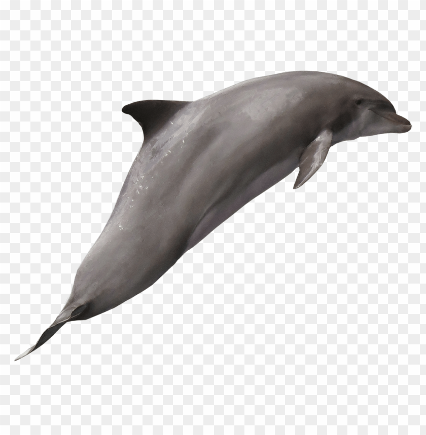 free PNG Download Dolphin png images background PNG images transparent