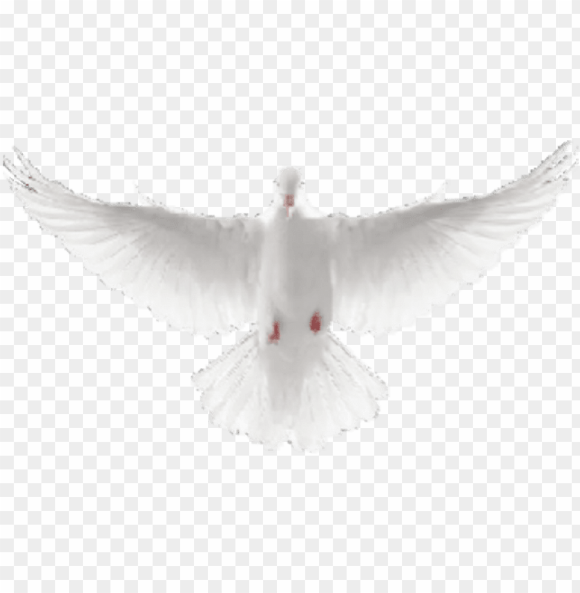 free PNG dove avatar 1515040674 - flying dove PNG image with transparent background PNG images transparent