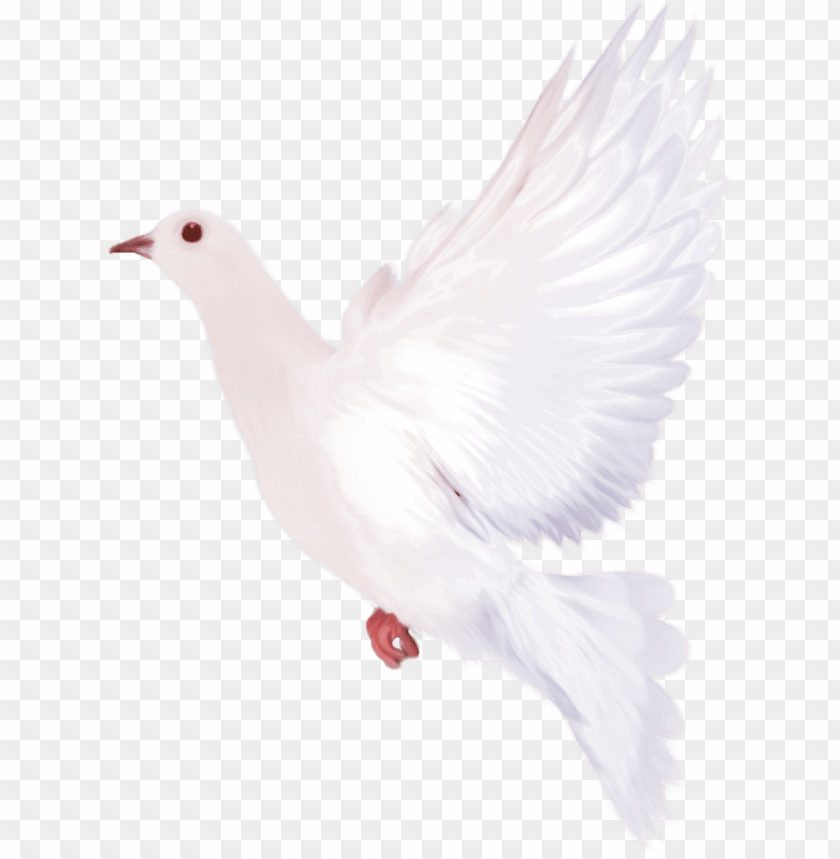 free PNG dove clipart watercolor - dove watercolor PNG image with transparent background PNG images transparent