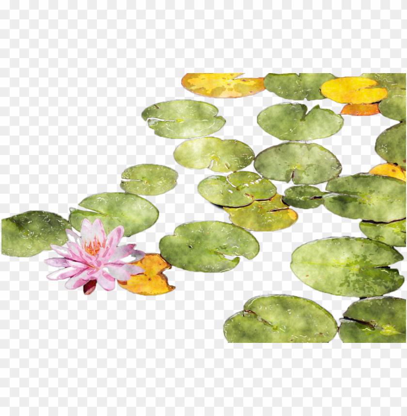 free PNG download lotus watercolor png clipart sacred lotus - watercolour water lily PNG image with transparent background PNG images transparent