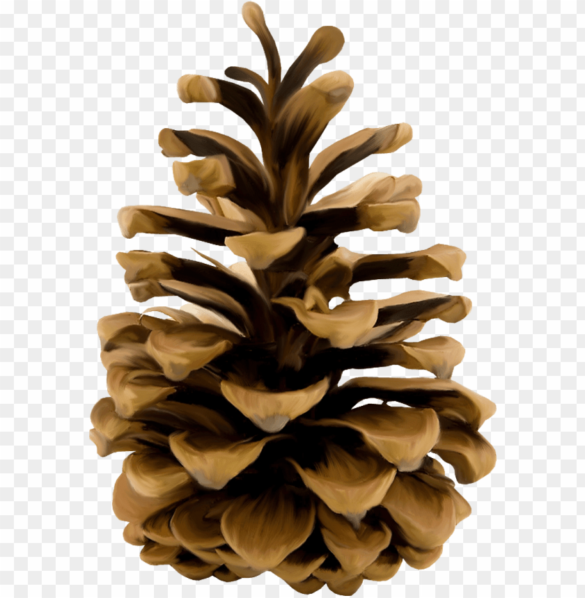 free PNG download - pinecone PNG image with transparent background PNG images transparent