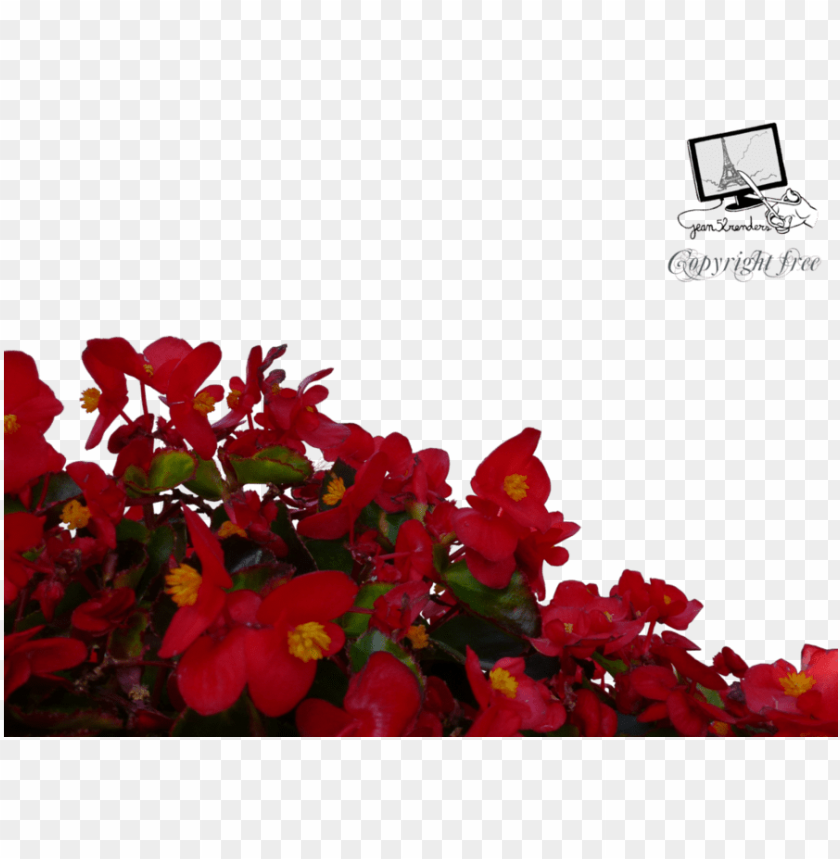 free PNG download red flowers png clipart flower clip art flower - red flowers PNG image with transparent background PNG images transparent