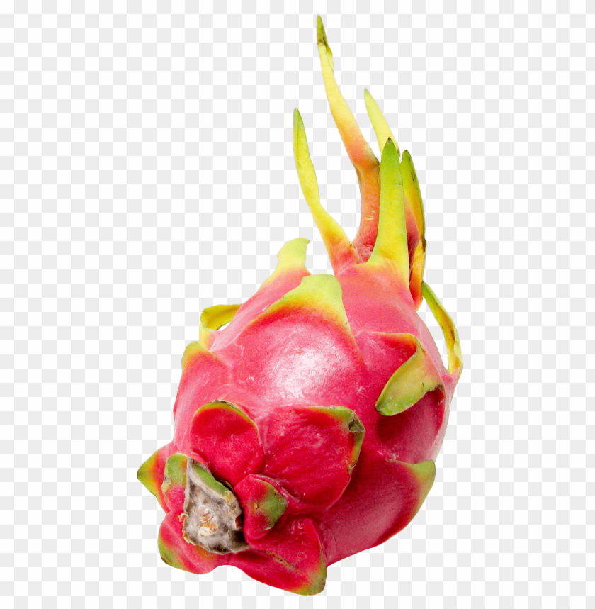 free PNG Download dragon fruit png images background PNG images transparent