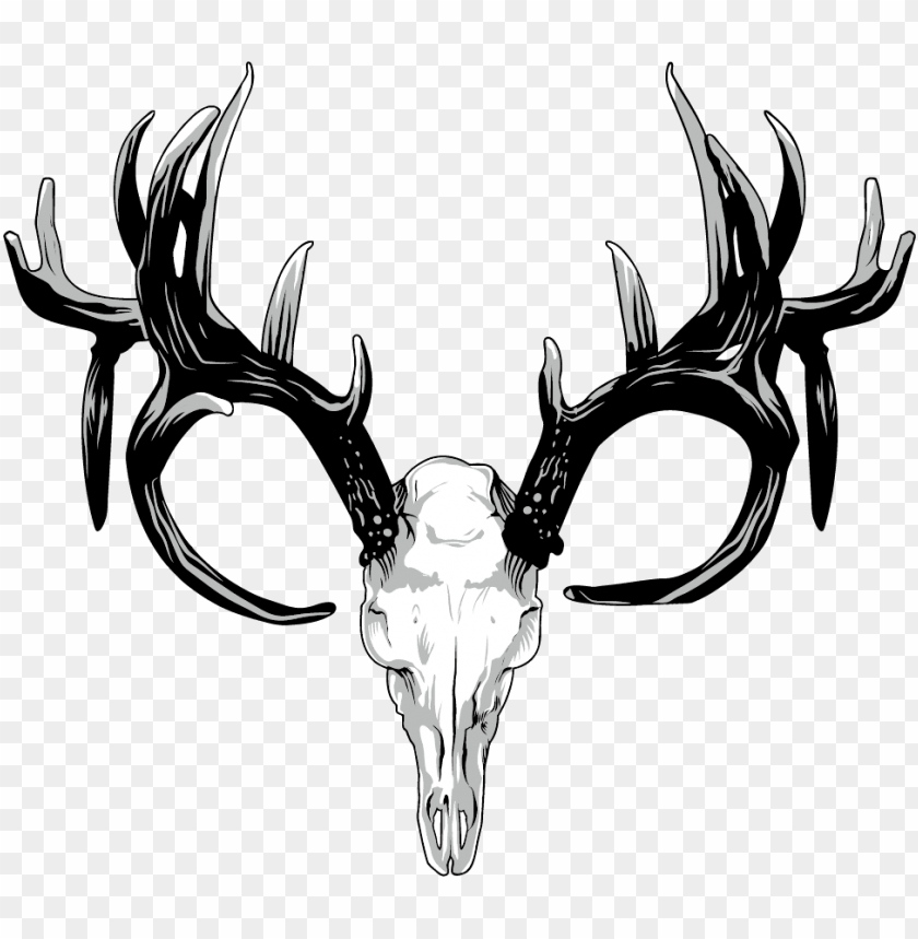 free PNG drawing antlers white tailed deer - deer skull PNG image with transparent background PNG images transparent