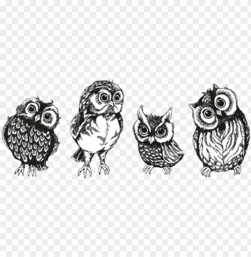 free PNG drawing art cute birds owls transparent cute owls owl - owl transparent PNG image with transparent background PNG images transparent