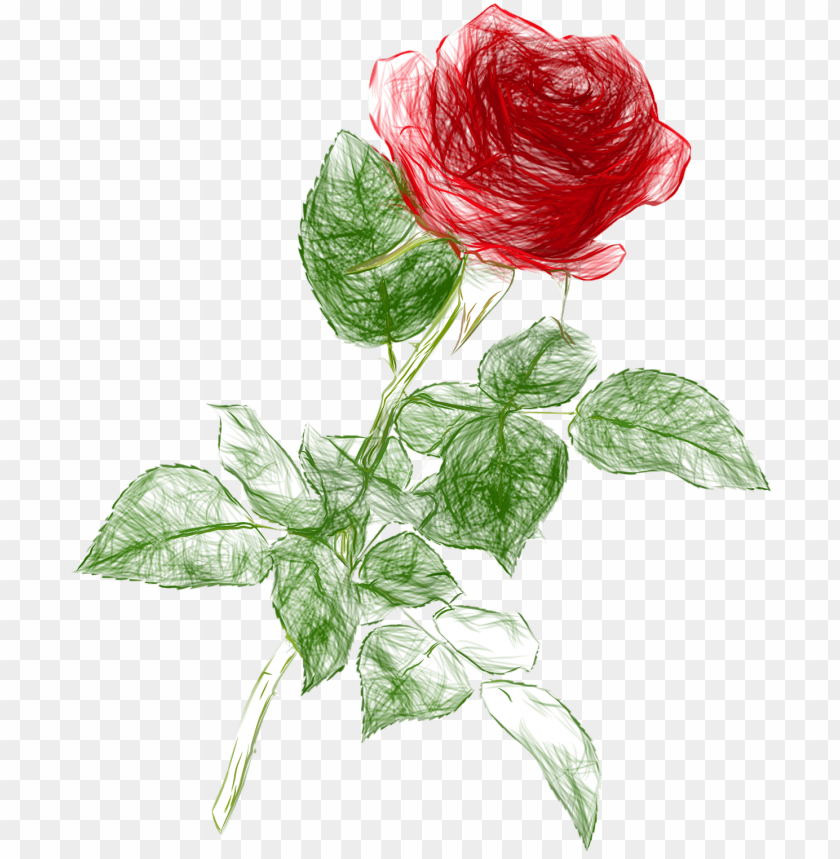 free PNG drawing pencil color rose png clipart picture - rose drawing PNG image with transparent background PNG images transparent