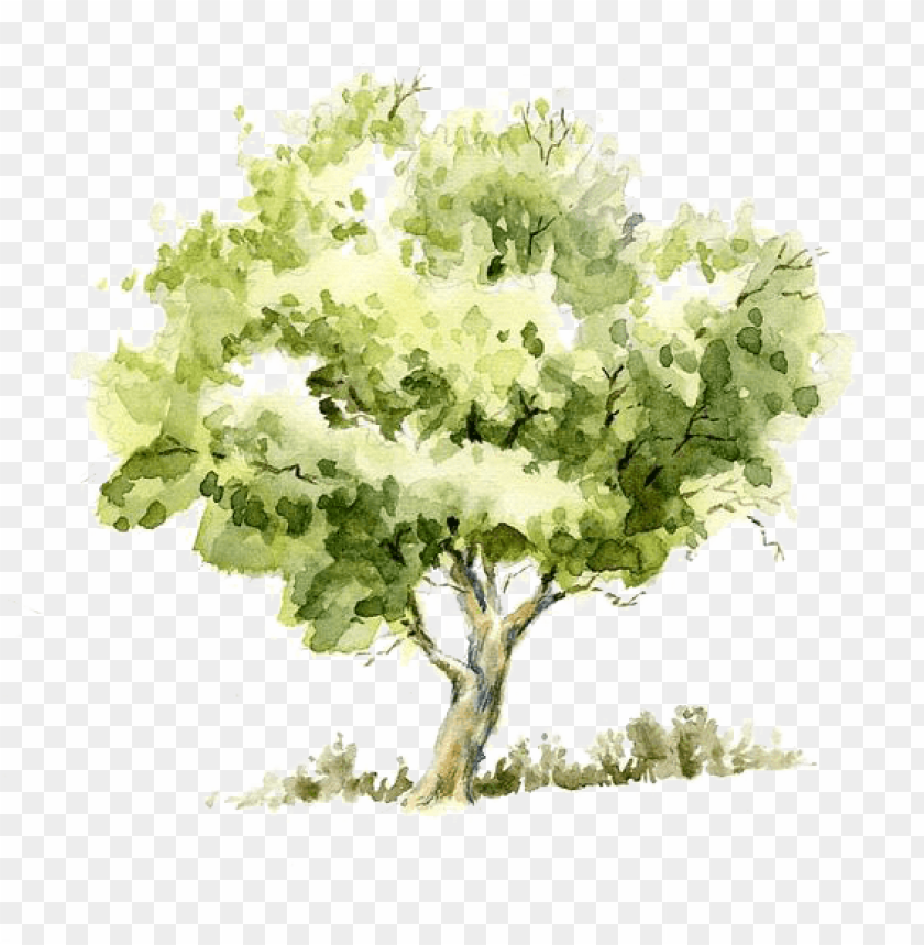 free PNG drawing watercolor painting tree pencil sketch - watercolor tree PNG image with transparent background PNG images transparent