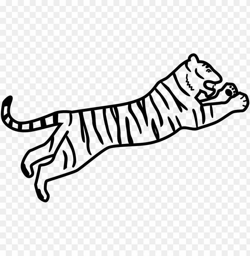 free PNG drawing white tiger siberian tiger bengal tiger coloring - bengal tiger easy drawi PNG image with transparent background PNG images transparent