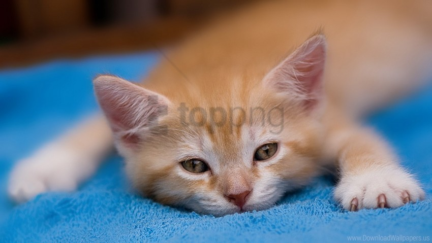 free PNG dream, kitten, red wallpaper background best stock photos PNG images transparent
