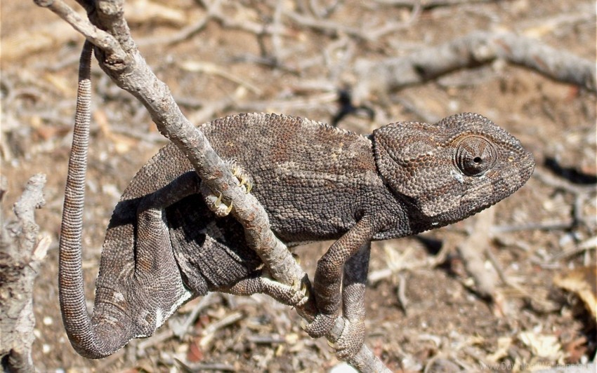 free PNG dry, grass, lizard, twigs wallpaper background best stock photos PNG images transparent