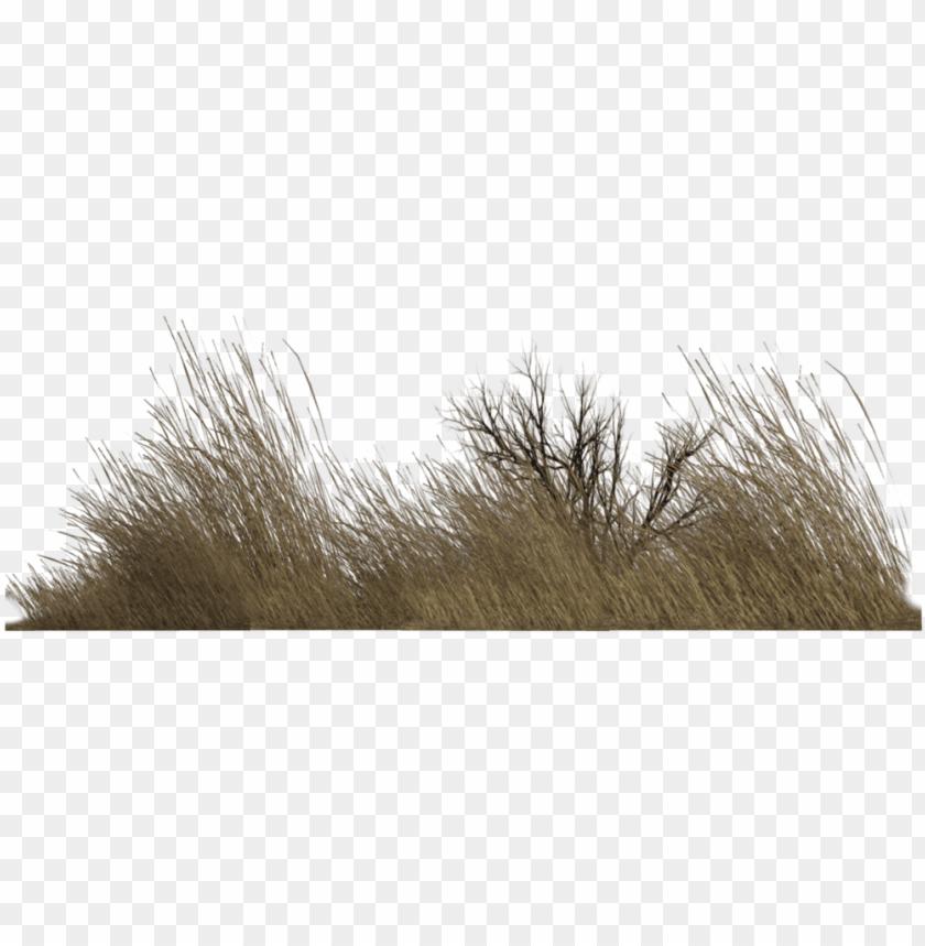 free PNG dry grass png - imagenes png de vegetacio PNG image with transparent background PNG images transparent
