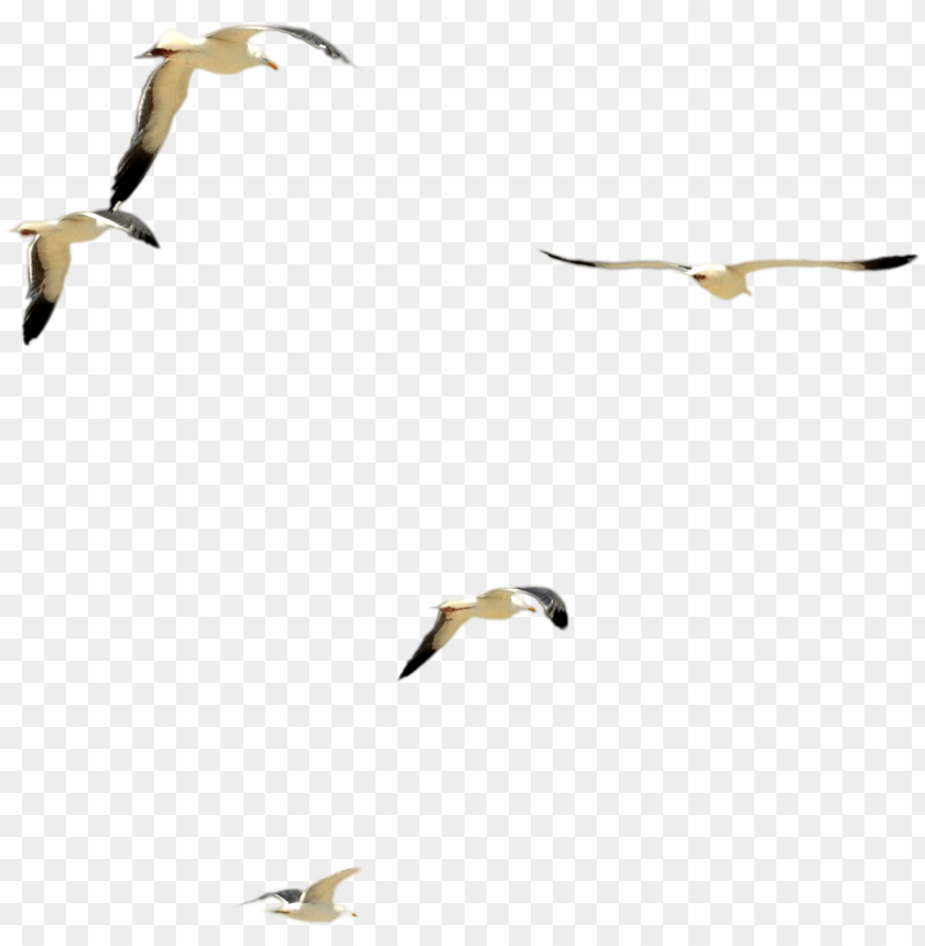 free PNG dsc 0085 flock of beach birds psd file by annamae22 - flock of birds psd PNG image with transparent background PNG images transparent