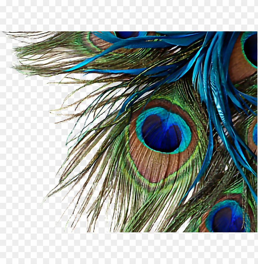 free PNG eacock feather high resolutio PNG image with transparent background PNG images transparent