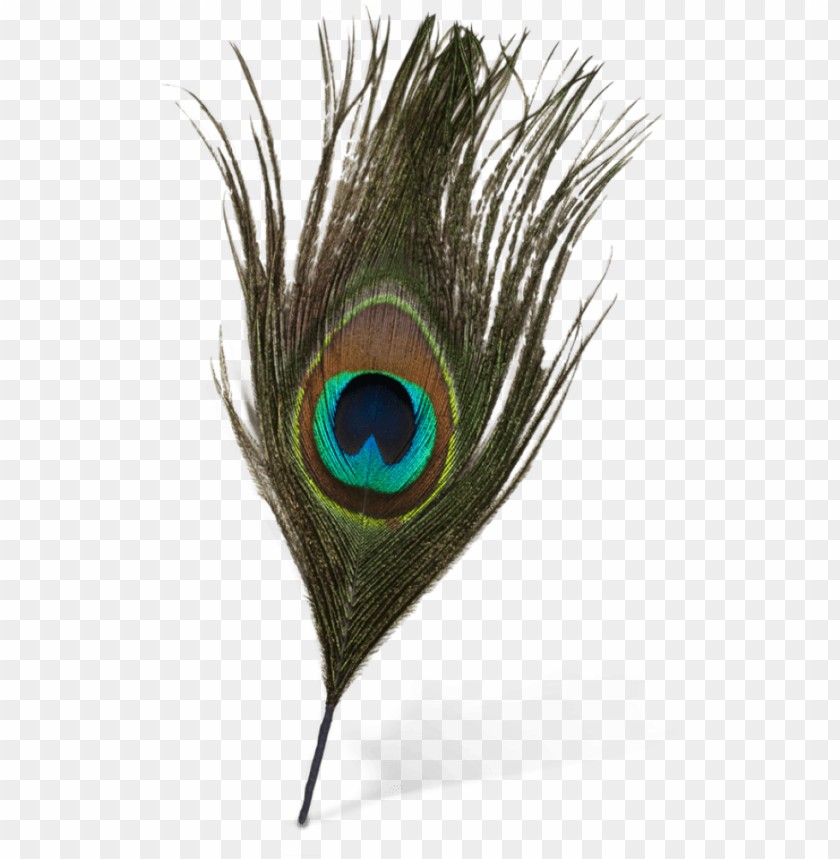 free PNG eacock feather vector png - peacock feather images PNG image with transparent background PNG images transparent