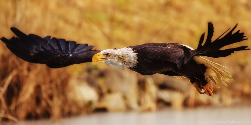 free PNG eagle, flap, fly, wings wallpaper background best stock photos PNG images transparent
