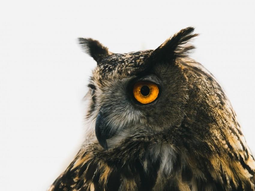 free PNG eagle owl, owl, predator, bird, beak, eyes background PNG images transparent